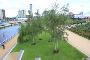 Birches_in_olympic_park-reduced